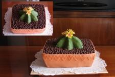 3_28_kaktus